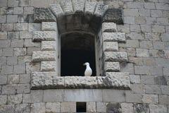 Windows в каменных стенах крепости Mamula Стоковые Фото