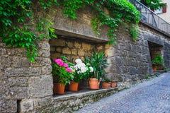 Windows и двери в старом доме украшенном с цветком Стоковые Изображения