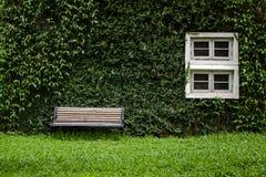 Windows и стены предусматриваны с взглядом плюща элегантным и классическим Стоковое Фото