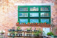 Windows, кирпичная стена, зеленые растения, Гонконг Стоковая Фотография