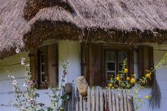 Windows на старом деревянном доме Стоковое фото RF