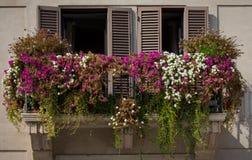 Windows обрамило цветастыми цветками в аркаде в Рим, Италии Стоковые Изображения RF