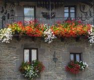Windows с большими красными и белыми цветками пеларгонии Стоковые Фотографии RF