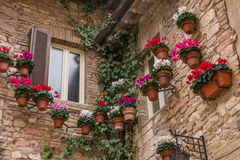 Windows с в горшке заводами и плющом в Assisi Стоковое Изображение RF