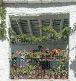 Windows с цветками Стоковое Изображение RF