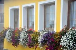 Windows, цветки и цвета Стоковые Фото