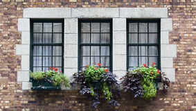 Windows. Three windows on a wall with flowers Stock Photos