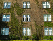 Windows. Nine windows and floral wall Stock Photography