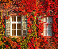 Windows At Autumn Royalty Free Stock Photography