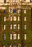 Windows av hotellet som täckas i vines Fotografering för Bildbyråer