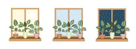 Windows avec les plantes d'intérieur tropicales dans des pots illustration libre de droits