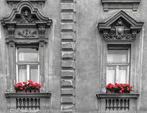 Windows b&w with red flowers stock photo