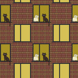 windows and cats Royalty Free Stock Photos