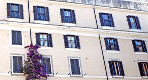 Windows. Civitavecchia Rome,Italy An ancient palace of the old town with its windows and a climbing wisteria plant royalty free stock photos