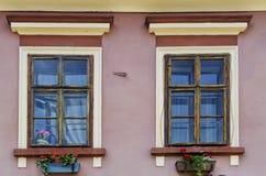 Windows con i fiori Immagine Stock