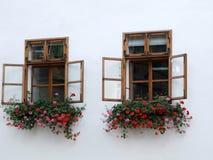 Windows con las flores Fotos de archivo libres de regalías