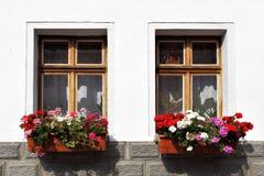 Windows con las flores Imagen de archivo