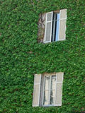 Windows covered with green leaves Royalty Free Stock Photography