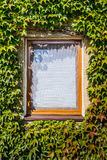 Windows covered with ivy Stock Images