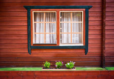 Windows with curtains and some green flowers on painted wooden house.  Royalty Free Stock Photography