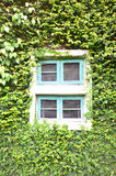 Windows dans le jardin Photographie stock