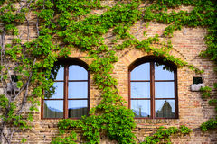 Windows decorated with ivy in a Tuscan town Stock Photos