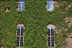 Windows del palacio real en Estocolmo Fotografía de archivo