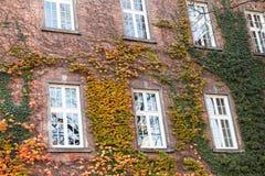 Windows di Cracovia Immagini Stock
