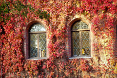 Windows di vecchia costruzione coperta di foglie rosse Fotografia Stock
