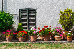 Windows and doors in an old house decorated with flower stock photography