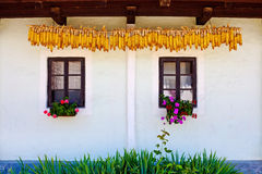 Windows and dry corn. Croatian traditional village house in Kumrovec windows and dry corn Royalty Free Stock Photos