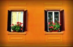 Windows e fiori Immagine Stock