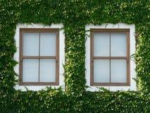 Windows ed edera 02 Fotografia Stock Libera da Diritti