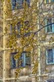 Windows eines mehrstöckigen Gebäudes und Blätter der gelben Birke Lizenzfreie Stockbilder