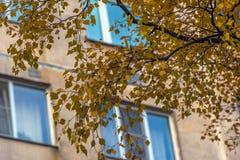 Windows eines mehrstöckigen Gebäudes und Blätter der gelben Birke Lizenzfreie Stockfotos