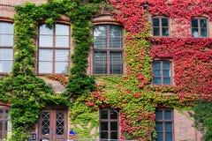 Windows en el otoño Fotos de archivo