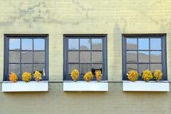 Windows et mur Photos stock