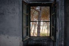 Windows et vert Photographie stock