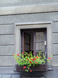 Windows with flower pot Royalty Free Stock Images