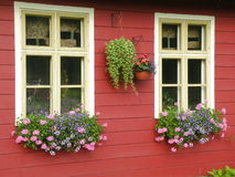 Windows with flowers. Pink and blue flowers in window boxes beneath white windows in the front of the house Royalty Free Stock Photography