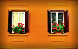 Windows and Flowers. Square windows and red flowers Stock Image