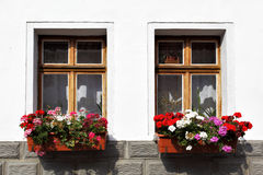 Windows with flowers Stock Image