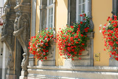 Windows with flowers in Budapest Royalty Free Stock Photo