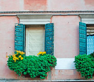 Windows and flowers Royalty Free Stock Photo