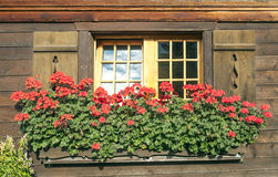 Windows with flowers Stock Photo