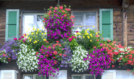 Windows with flowers Royalty Free Stock Image