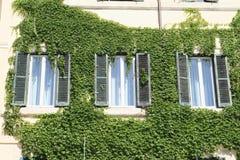Windows fra l'edera verde Fotografia Stock