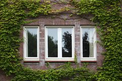 Windows framed with ivy Stock Photo