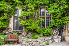 Windows framed in ivy Royalty Free Stock Image