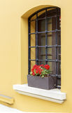 Windows with fresh red flowers. Stock Photos